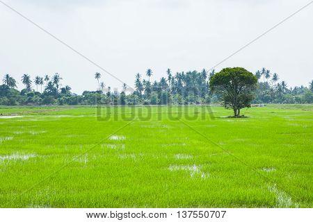 Green Fields in Pulau Pinang at Malaysia