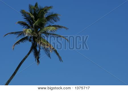 Palm Tree Over Blue Sky