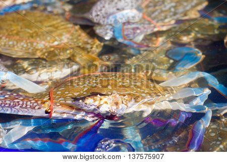 crab isolated on white background, Fresh crab seafood.