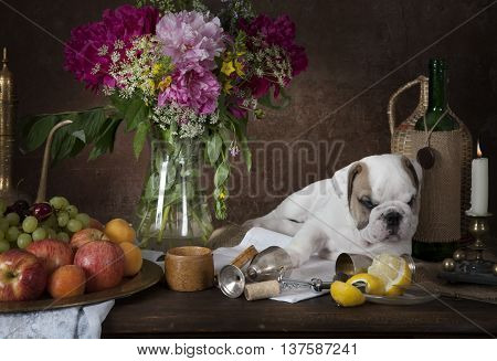 English Bulldog puppy lying on the table with fruit flowers candle and wine bottle. Still life in classical Dutch style