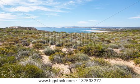 Lush bushland in the coastal dunes at Red Bluff with the turquoise Indian Ocean seascape under a blue sky in Kalbarri, Western Australia.