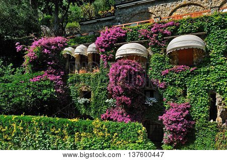 garden, Landscape design of wall overgrown bougainvillea with sun visors