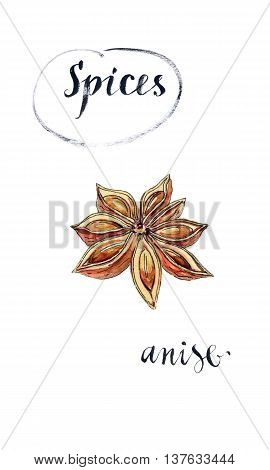 Star anise spice fruit and seeds hand drawn - watercolor Illustration