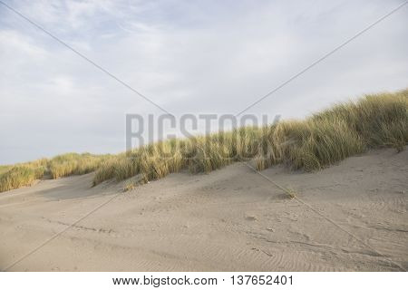 Overview of a Dune Top overgrown by Marram Grass (Amophila arenaria)