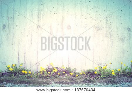 Yellow Flowers With Gray Cement Wall Texture Background Vintage Style