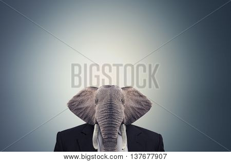 The elephant dressed in a businees suit
