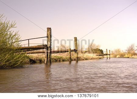 Wetland or marshland with reeds. Nature background showing a river, reeds and clear blue sky. Copy space.