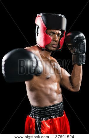 Boxer performing upright stance on black background