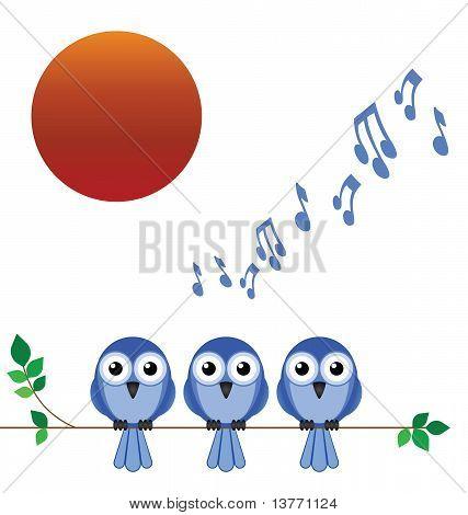 Bird dawn chorus