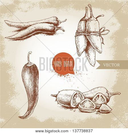 Hand drawn sketch style chili peppers set. Vintage eco food vector illustration. Ripe and sliced peppers. Grunge background.
