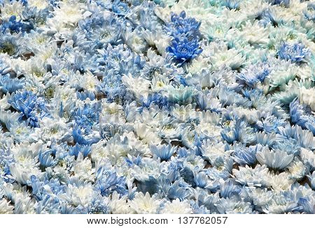 Blue and white flowers. Usable as a background