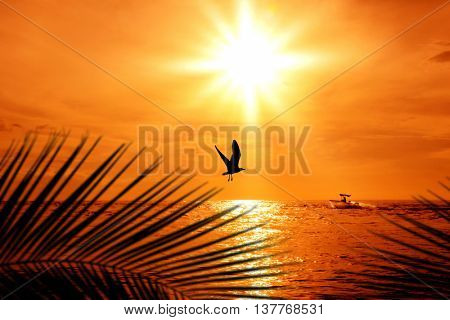 seagull flying over sunset in florida