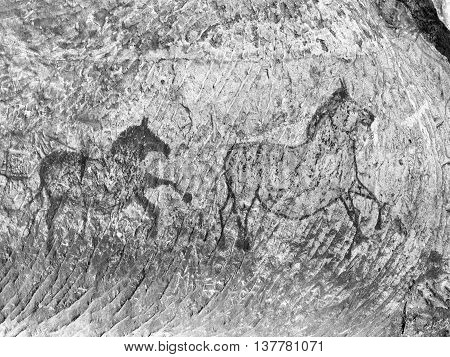 Old  Cave. Carbon Paint Of Horses On Sandstone Wall