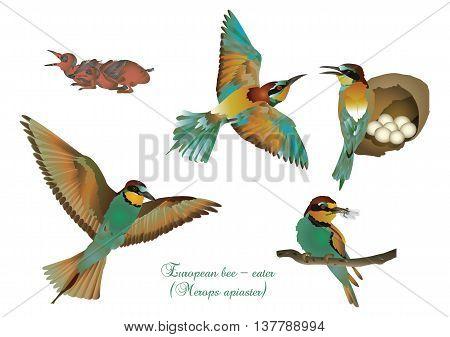 It is illustration of beautiful bird European bee-eater