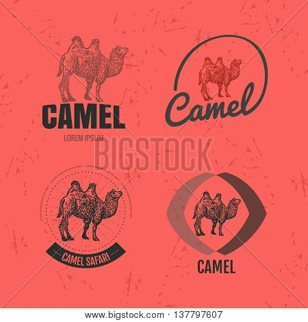 Vector colorful set with desert camel. The camel as main element of logotypes on red background. Engraves vector design graphic element emblem logo sign identity logotype