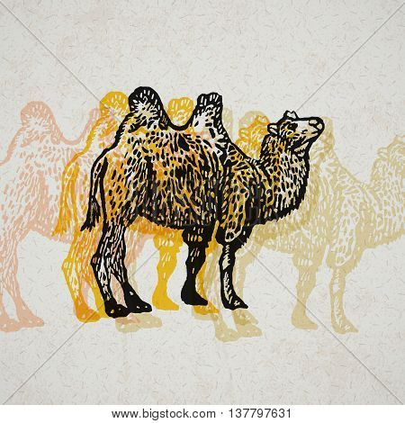 Camel sign. Bactrian Camel. Desert Tourism. Vector engraved Illustration. Linocut camel Isolated on old paper