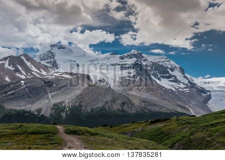 Snow Covered Mt Athabasca From the Wilcox Pass Trail