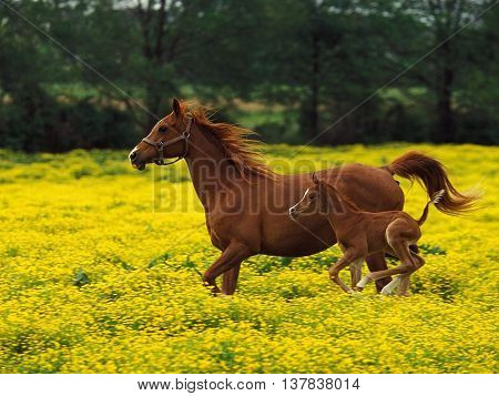 Beautiful horse quickly jump on a beautiful meadow