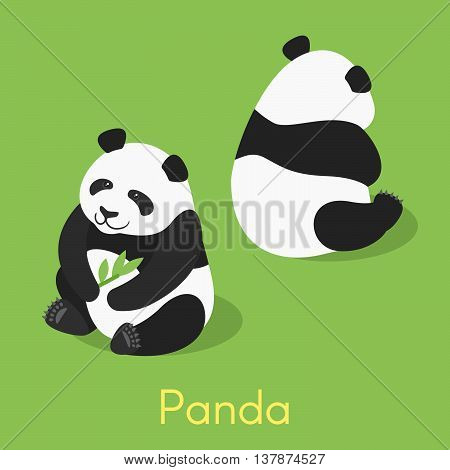 Vector isometric illustration of panda. Panda holding bamboo branch.