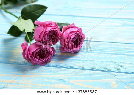 Beautiful Pink Roses On A Blue Wooden Table