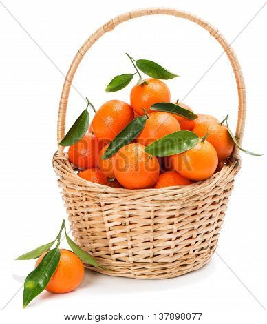 Tangerine or clementine fruit with green leaves in a basket isolated white background.