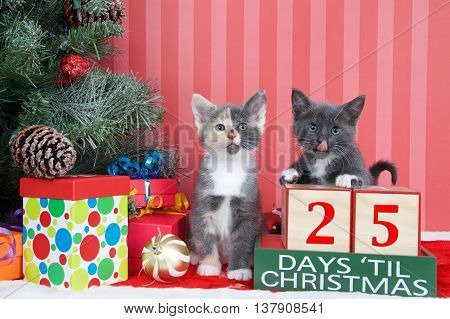 Calico and gray and white kittens next to christmas tree with colorful presents and holiday balls of ornaments next to Days until Christmas light beech wood blocks 25 days til