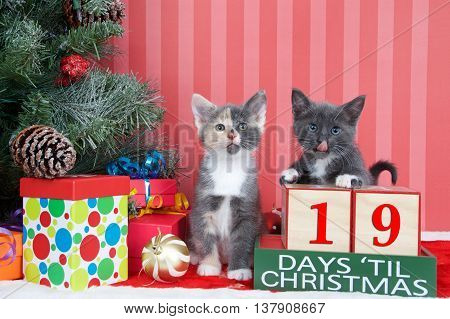 Calico and gray and white kittens next to christmas tree with colorful presents and holiday balls of ornaments next to Days until Christmas light beech wood blocks 19 days til