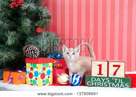 Orange tabby kitten coming out of a stocking next to a christmas tree with colorful presents and holiday balls of ornaments next to Days until Christmas light beech wood blocks 17 days til