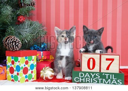 Calico and gray and white kittens next to christmas tree with colorful presents and holiday balls of ornaments next to Days until Christmas light beech wood blocks 07 days til