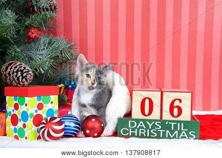 Calico kitten coming out of a stocking next to a christmas tree with colorful presents and holiday balls of ornaments next to Days until Christmas light beech wood blocks 06 days til Christmas