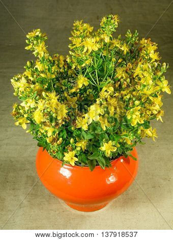 Hypericum perforatum. Still life. Bouquet of meadow flowers in orange pots standing on a wooden table. Rustic style.