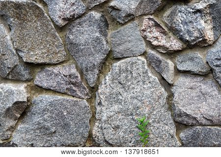 Natural untreated grunge stone wall background. Gray rocks texture and small green grass sprout