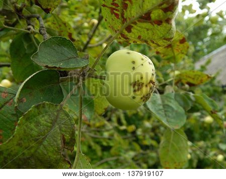 Natural flowers, fruit trees and texture garden