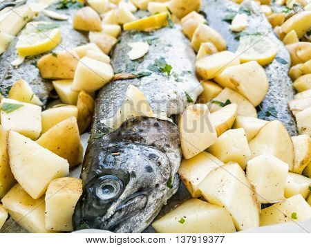 Delicious grilled trout with potatoes. Food theme. International cuisine.