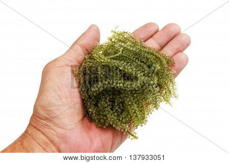 sea grapes or green caviar in human hand. Isolated on white with work paths.