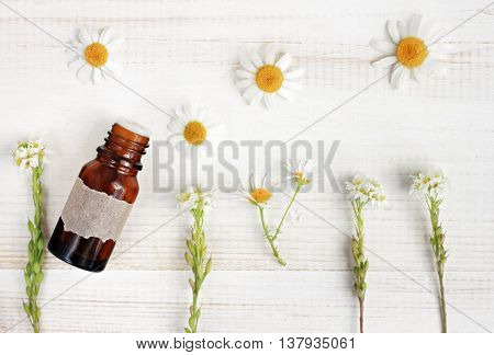 Natural herbal treatment. Essential oil, fresh herbs, chamomile flowers, top view light background. Focus on bottle.