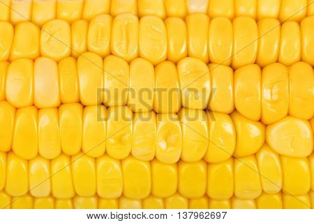 Ear of corn - food background
