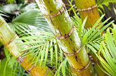 Tropical forest of palm trees in detail poster