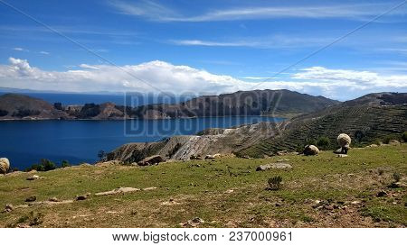 Sheep On The Island Of The Sun. Landscape Of Lake Titicaca. Isla Del Sol - Bolivia