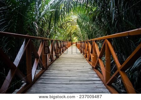 The Walkway Is Made From A Wooden Bridge Has Handrails Used Walked Into The Tropical Rain Forest. Pe