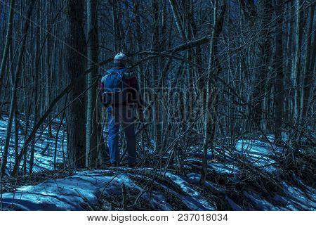 A Traveler In A Fantastic Night Forest Around Mysterious Trees And Delicate Branches Fascinating And