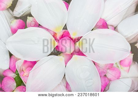Background, Tenderness, Femininity Concept. There Are Huge White Petals That Are Floating On The Sur
