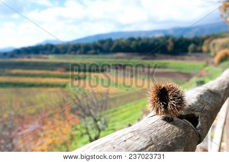 Landscape Of Vineyard With Wood And Italian Mountains On Background At Fall Season. Sicilly, Italy,