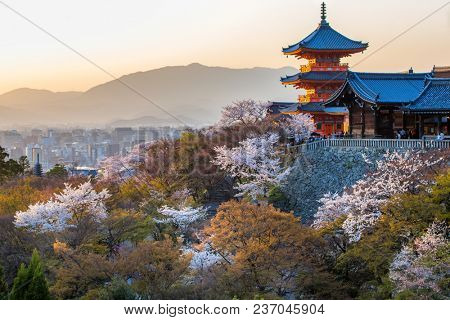 Sunset at Kiyomizu Dera temple during sakura cherry tree blossom, Kansai, Japan