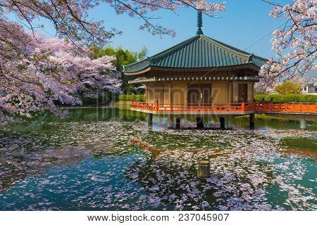 Japanese Shinto temple Abe Monju-in during Sakura cherry tree blossom, Kansai,Japan