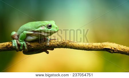 A Green Small Frog Is On Branch
