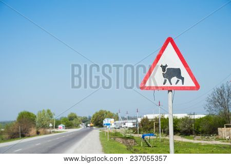 Warning Road Sign About The Presence Of Cattle