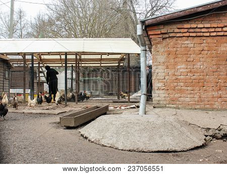 Old Ladoga, Russia - 8 April, The Monk Feeds The Chickens, 8 April, 2018. The Subsidiary Farm Of The