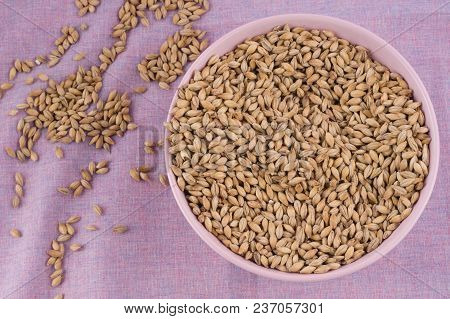 Pale Malt In Pink Bowl On Purple Textile Background. Craft Beer Brewing From Grain Barley Malt In Pr