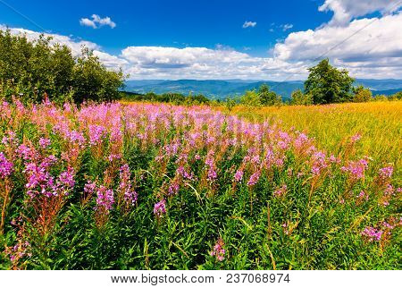 Wild Purple Herbal In Mountains. Lovely Nature Landscape